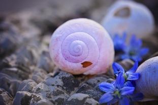 shell-756724_1280